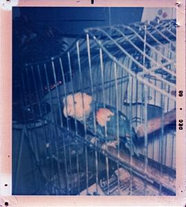 Polly68